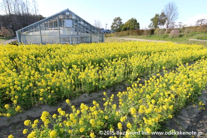 農業センター(delaふぁーむ)